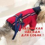 odezhda-dlya-sobak-vz