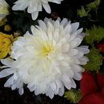 Alechka - Ярмарка Мастеров - ручная работа, handmade