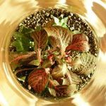 florarium-neva