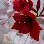 flowershop-2014
