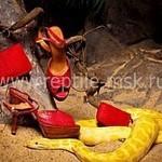 Ирина (Reptile) - Ярмарка Мастеров - ручная работа, handmade