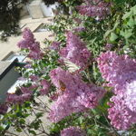 flowerofjoy
