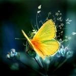 butterfly357