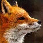WildFox - Ярмарка Мастеров - ручная работа, handmade