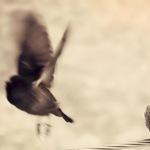 Крылатый Ежик - Ярмарка Мастеров - ручная работа, handmade