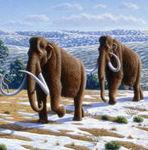 mammoths