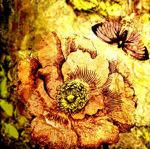 kladovaya-flora