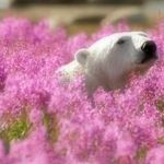 Белый медведь - Ярмарка Мастеров - ручная работа, handmade