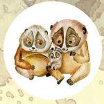 lemurfamily