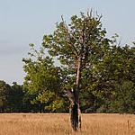 duh-dreva