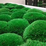 Green Ecco Moss - Ярмарка Мастеров - ручная работа, handmade