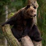 Медвежий угол - Ярмарка Мастеров - ручная работа, handmade