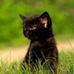Черный котенок - Ярмарка Мастеров - ручная работа, handmade