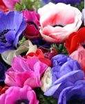 yuliya-flower22