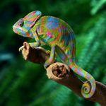 Хамелеон - Ярмарка Мастеров - ручная работа, handmade