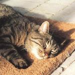 Lazy Cat - Ярмарка Мастеров - ручная работа, handmade