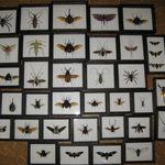 entomolog